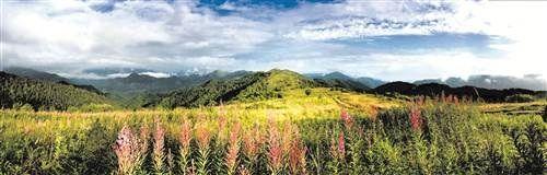 《重庆市森林生态旅游地图》发布 邀您走进森林