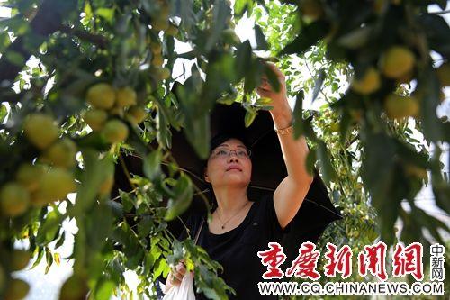云阳国庆接待游客65.2万人 同比增长16.5%