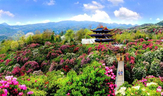 贵州毕节打造城市避暑组团来渝吸引避暑客