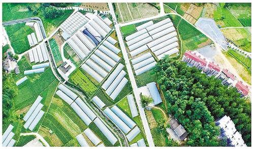 航拍武隆区木根乡高山农业基地。近年来,武隆以特色农业助推生态工业发展,实现了豆干、苕粉、中药材、高山蔬菜的集约化、规模化生产。(本报资料图片)