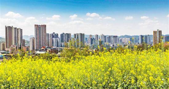 重庆市南川区石漠化治理后的花盆山上开满了花儿。特约摄影 瞿明斌