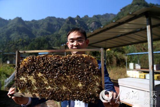 中益乡万寿山中蜂公司技术人员展示场内培育的蜜蜂。胡虹/摄