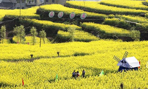 游客在金灿灿的花田赏花。特约通讯员 李美华 摄