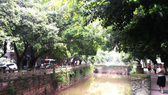 图为 图为滨河西路巴川河畔的小叶榕。铜梁宣传部供图