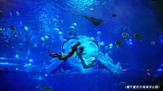 图为 水下情景剧表演 重庆汉海海洋公园供图