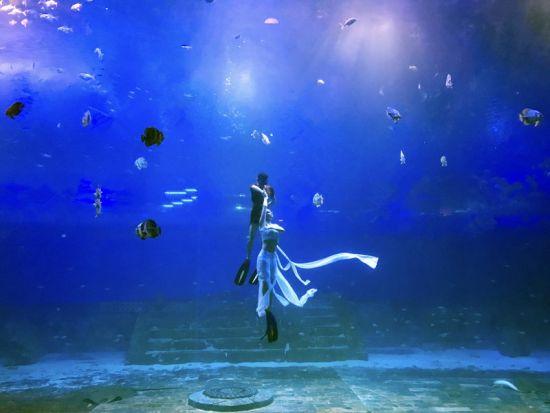 重庆汉海海洋公园供图 图为表演现场