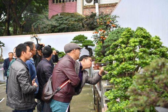 """重庆南岸首届""""中国农民丰收节""""开幕 百余件盆景亮相山城"""