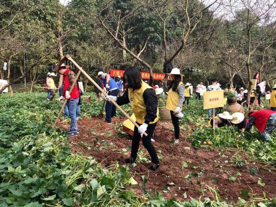 图为m.ca88.com校园学问建设之首届农耕学问体验活动。张翼飞 图