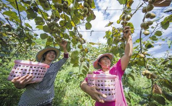 南川:产业支撑有力量 乡村振兴有希望