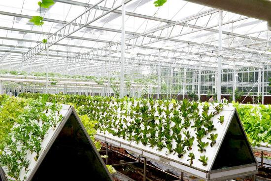 已投入生产的气雾蔬菜栽培工厂。记者 王翔 摄