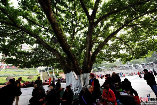 市民、市树、广场