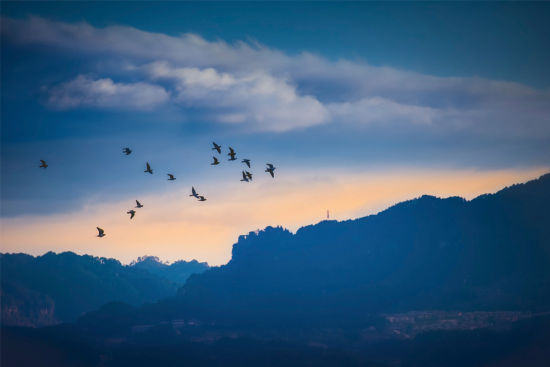 近日,文龙街道万兴山,鸟儿在空中自由飞翔。近年来,我区不断加大生态环境保护和建设力度,通过植树造林、生态保护、绿化提升工程建设,自然环境得到显著改善,前来栖息的候鸟种类和数量逐年增多,成为鸟类栖息繁衍的天堂。 记者 陈星宇 摄