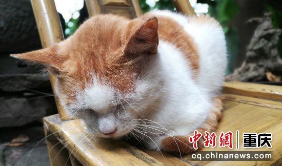 5月22日拍摄的寸滩正街的一只小猫。