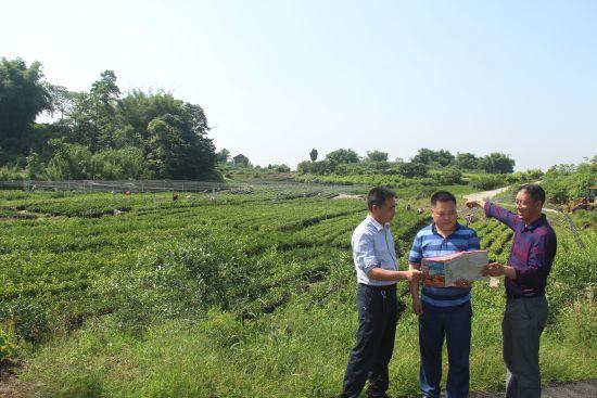 图为 当地部门在规划绿道区内产业发展。 赵武强摄