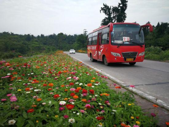 圖為鮮花簇擁的公路。 趙武強 攝