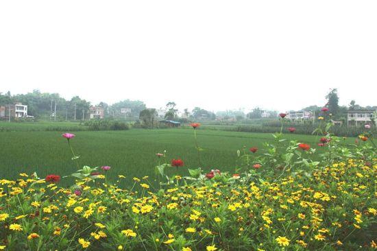 花草簇拥的田园。 赵武强 摄