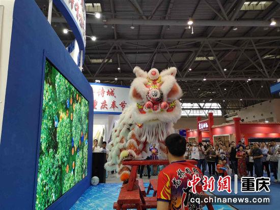 图为奉节展馆内的舞狮表演 段凯 摄