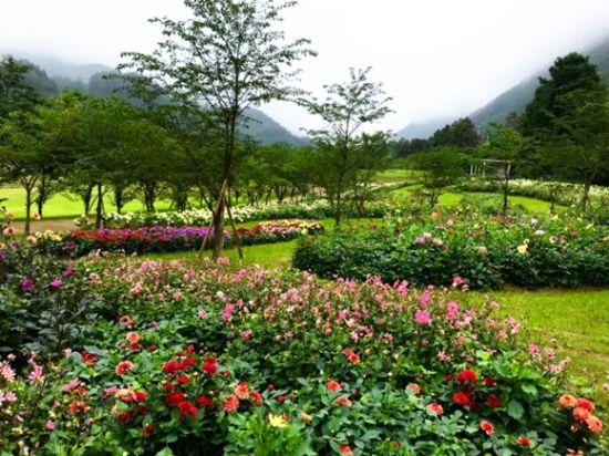 涪陵大木花谷将成为多年生花卉展示中心。景区供图 华龙网发