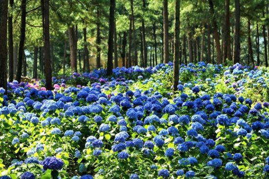 大木林下花园美不胜收。景区供图 华龙网发