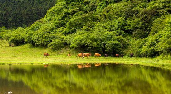 图为南天湖景区。丰都县委宣传部供图