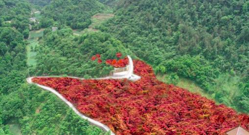 改造后的景点鸟瞰效果图。两江产业集团子公司供图
