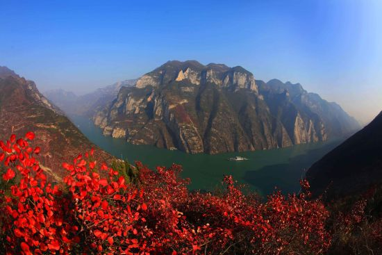 巫山红叶。