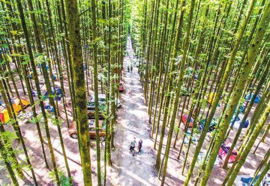 山王坪近万亩水杉和柳杉构成的独特风景,受到了游客青睐。甘昊旻 摄