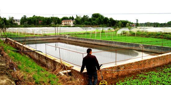 沼泽肥料通过管道输送到农田菜地。 赵武强 摄