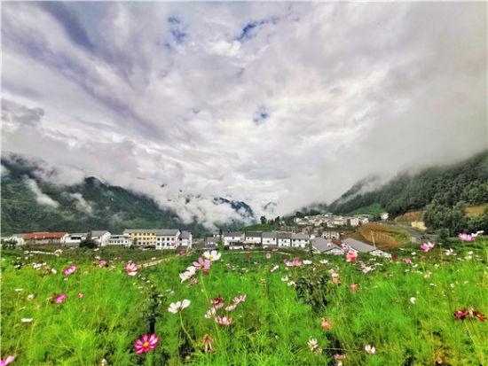 盛夏的茶山村各色鲜花竞相绽放。红池坝镇供图 华龙网发