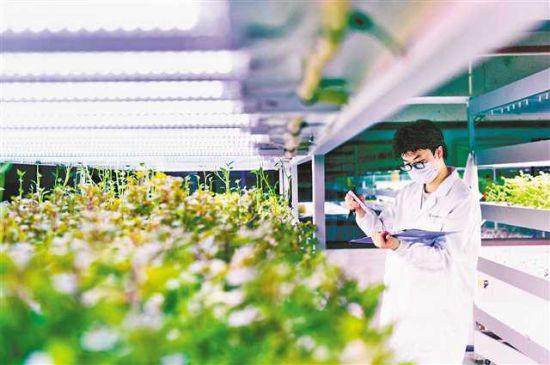 近日,重庆光电信息研究院,工作人员正在记录LED光照下植物生长情况。首席记者 谢智强 摄