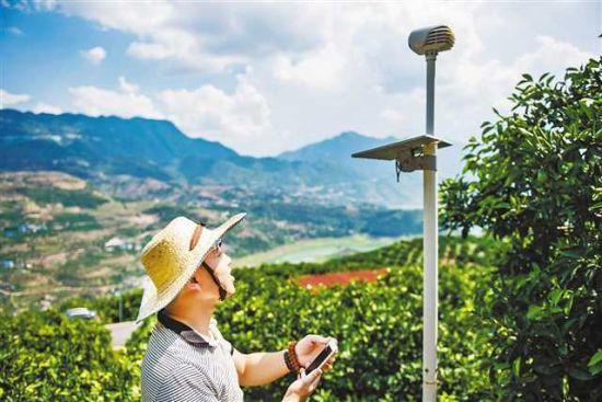 日前,奉节县白帝镇八阵村的铭阳果业智慧农场,工作人员正在调校监测仪器。记者 齐岚森 摄