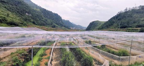 图为虎纹蛙养殖示范基地。金融局供图