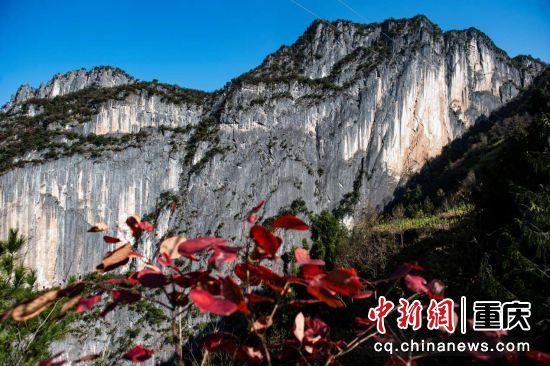 绝壁山崖红叶红