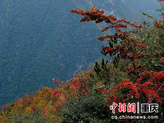 空旷山野万木红