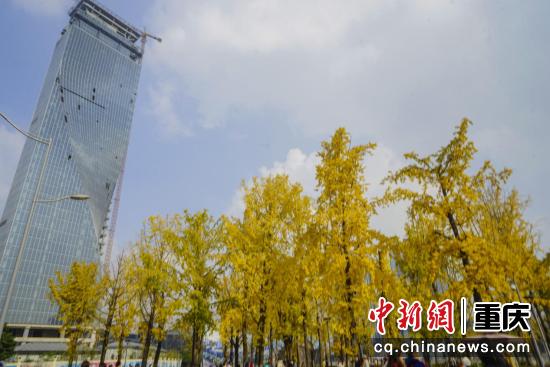 蓝天白云下,远远望去,是一片片金色的辉煌。金黄灿烂的树叶层层叠叠,开辟一条条金碧辉煌的大道,为这座城市增添一丝活力与诗情画意。