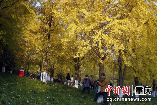 落叶虽已泛黄,但草地上还是绿意尚存。金色和草绿色相映成趣,把寒冬渲染成一幅清丽淡雅的油画。