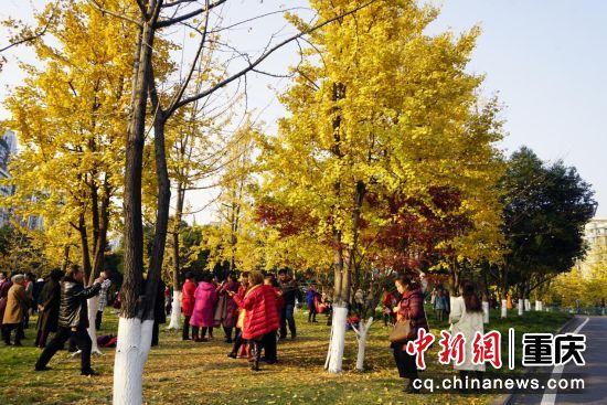 金色的树叶织起一片鲜黄,显现出鲜活的生命力。人们在其中穿梭驻足观赏,欣赏寒冷冬日中的一缕美景,心中暖意绵绵。