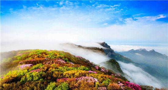 金佛山往年的杜鹃花开。南川区文旅委供图