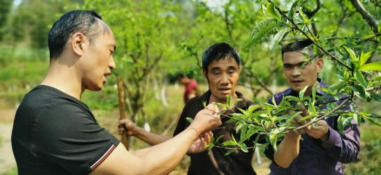 驻村工作队指导贫困户管理桃树。赵武强 摄