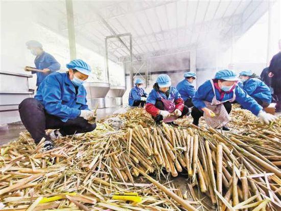 竹笋加工厂吸纳当地村民就业。记者摄