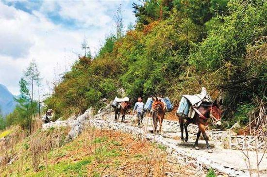 城口县高燕镇红军村修建中的观光步道。(受访者供图)
