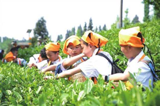 巴南学生在劳动实践课堂体验采茶