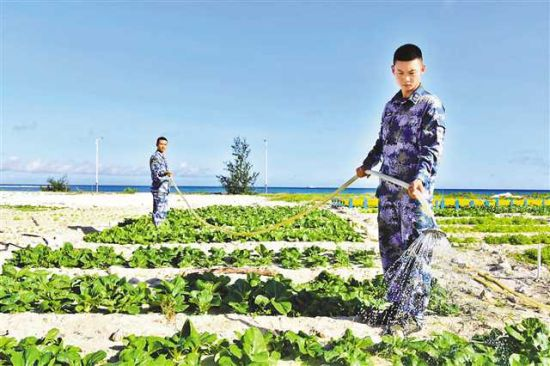 西沙守岛官兵浇灌力学治沙试验基地上的蔬菜。通讯员 陈竹飞 摄