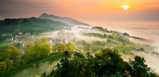俯瞰茶山,春和景明。永川区文旅委供图