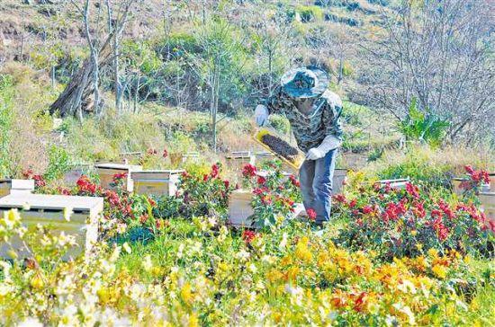 养殖户在管护蜜蜂。