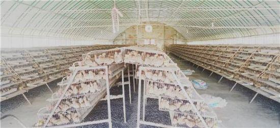 《【恒耀平台代理怎么注册】铜梁:农民工返乡创业 把鹌鹑面推向全国》