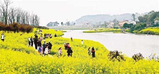 """""""梨、花、茶""""改变了这个传统农业村"""