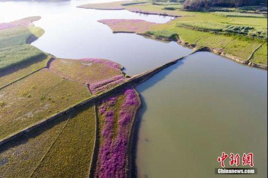 江西鄱阳湖畔到处花红草绿,一片春意盎然,美不胜收。 傅建斌 摄