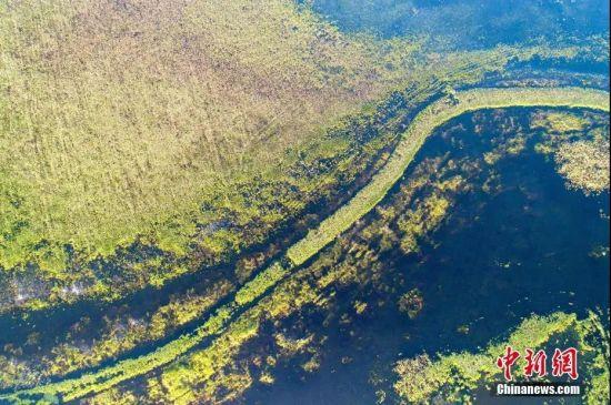 盛夏的鄱阳湖湿地水草碧绿,河道蜿蜒。 傅建斌 摄