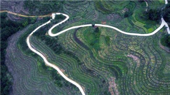 从空中俯瞰耀灵镇柏木村柑橘种植园,台地从河沟边绵延到山脚下,层层叠叠,错落有致。通讯员 赵晓龙 摄